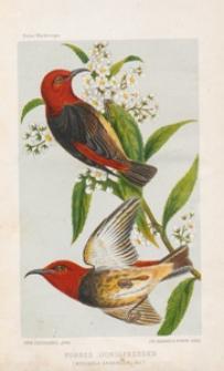 Wanderungen eines Naturforschers im Malanischen Archipel von 1878 bis 1883. Bd. 1