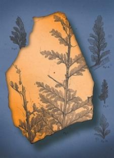 Atlas zu den Abhandlungen zur Geologischen Specialkarte von Preussen und den Thüringischen Staaten 1879 Bd. 3, H. 1