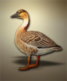 Danmarks Fugle : med henblik paa de i Gronland, paa Faeroerne og i Kongeriget Island forekommende arter Bd. 1, Indledning og Andefugle (Anseriformes)